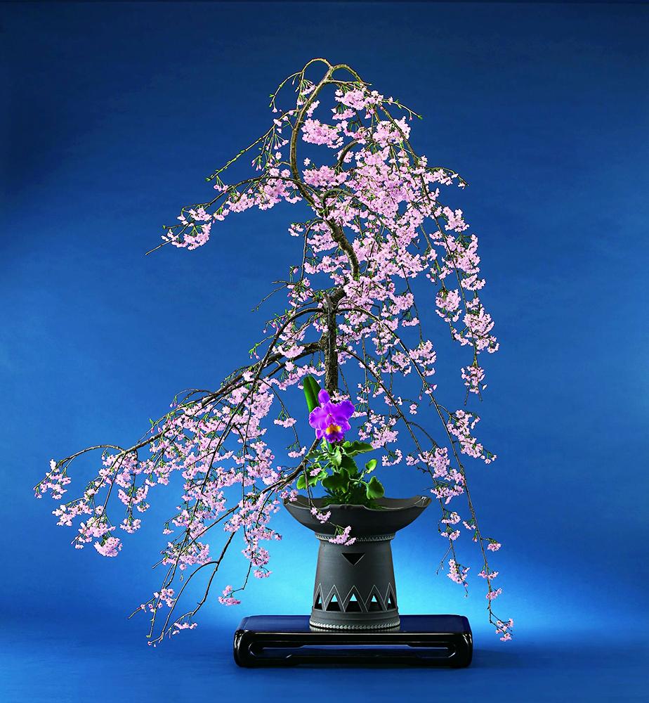 3月の花①